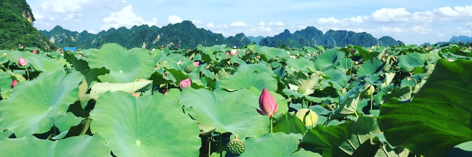 http://gody.vn/blog/toan.nguyen7562/post/dam-sen-an-phu-o-ha-noi-dep-me-man-khi-vao-mua-308
