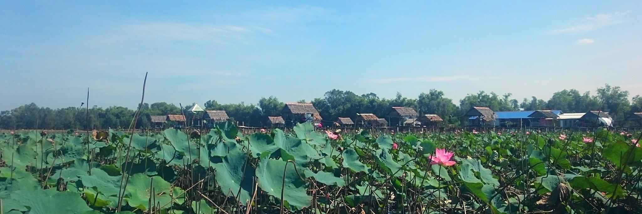 http://gody.vn/blog/trhgvhung.fa1924/post/vietnamsolo-thap-muoi-bat-ngat-sen-hong-967