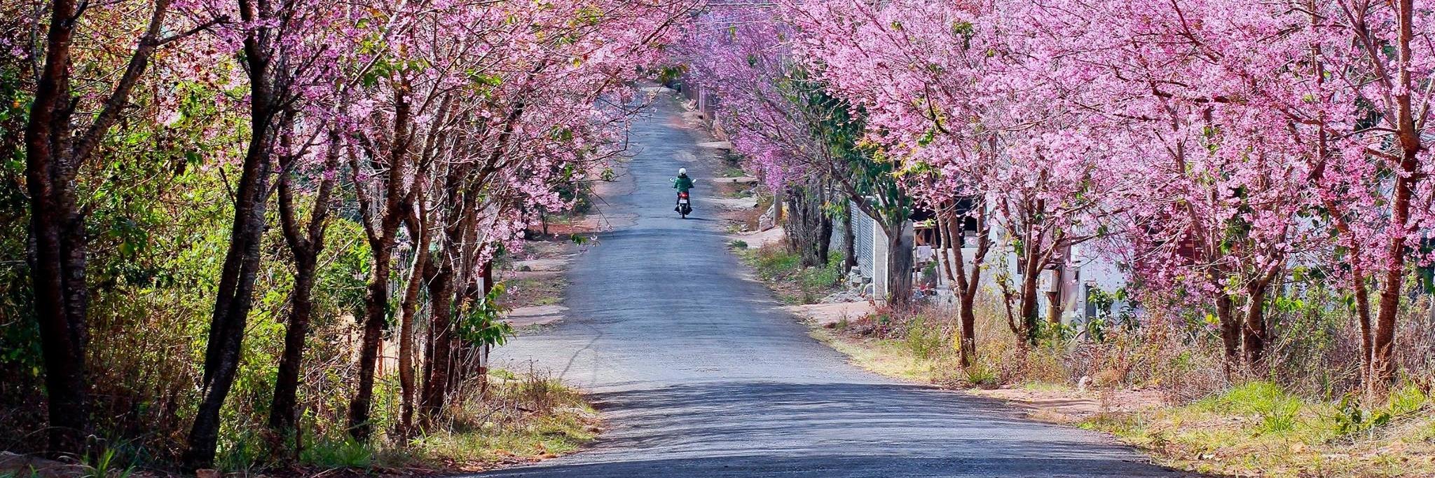 http://gody.vn/blog/tramanh.trieu6230/post/15-diem-tham-quan-noi-tieng-nhat-tai-da-lat-698
